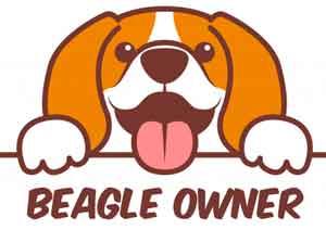 Beagle Owner